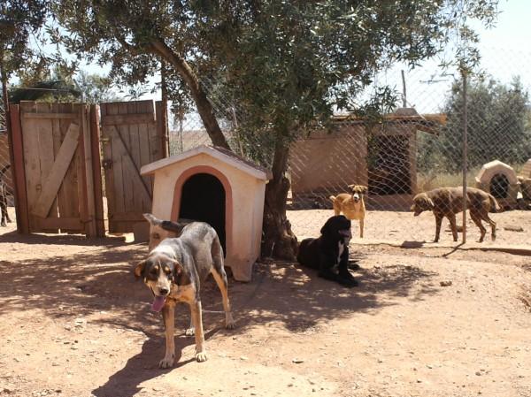 Canil SOS dos Animais de Moura